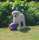 Bellamy with Ball