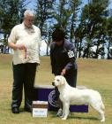 Bellamy taking Best of Breed April 2007