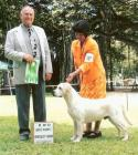 Ward taking Best Puppy and  RWD at Lab Specialty June 2006